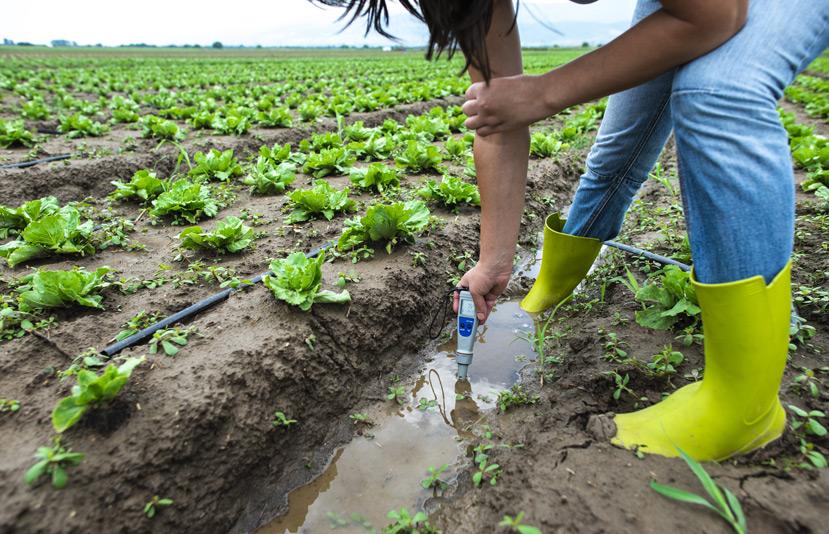 A talaj EC és pH mérése